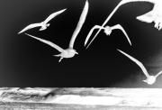 2_Contradiction_of_Flight-1