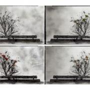 Degradated Shadows, Songzhuang International Photo Bienale